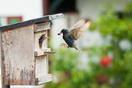 Feeding Your Songbirds Through the Winter