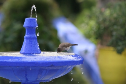 Help Our Feathered Friends Survive – February is National Bird-Feeding Month
