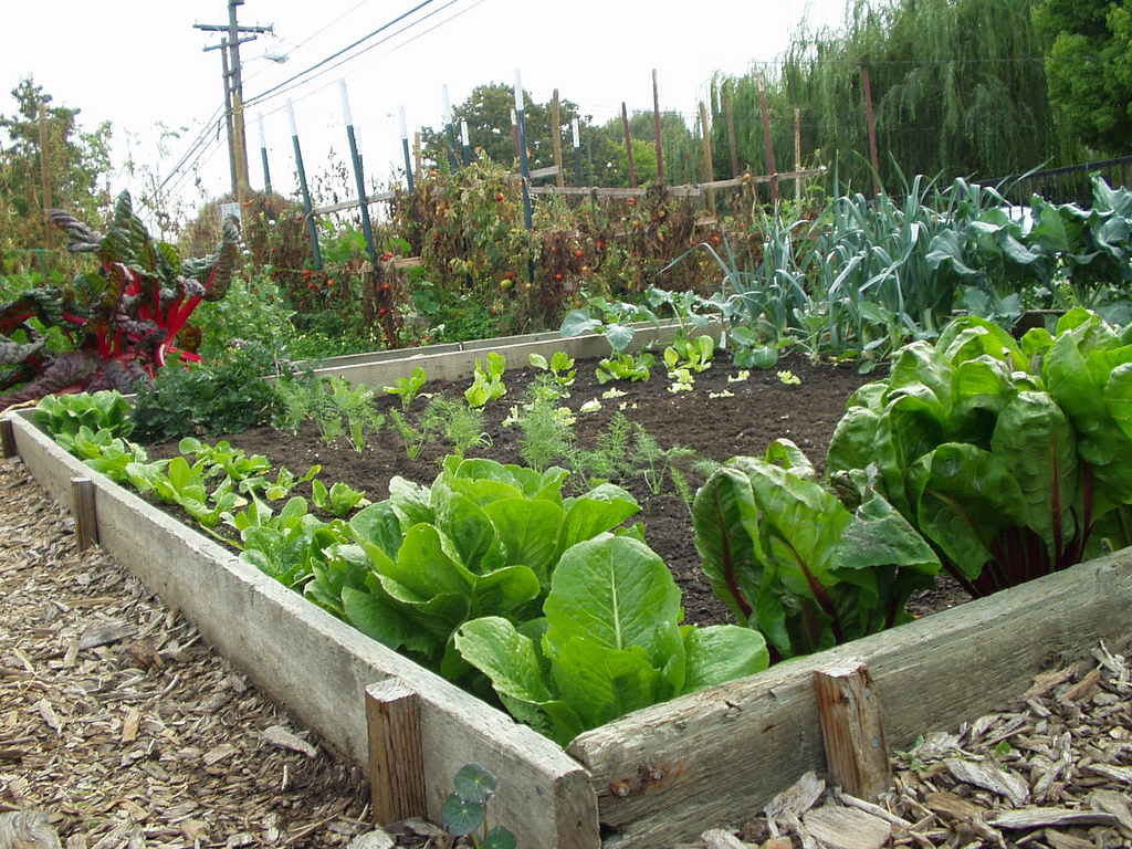 Easy Vegetable Garden Ideas Part - 17: Community Vegetable Garden