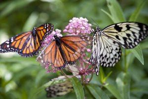 attracting butterflies